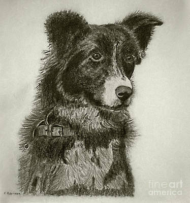 Animals Drawings - Border Collie Pencil Charcoal by my Mother by Kaye Menner