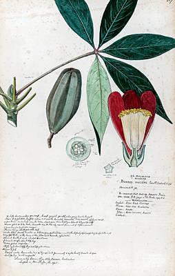 Global Design Shibori Inspired -  Botanical Studies - 16 by Celestial Images