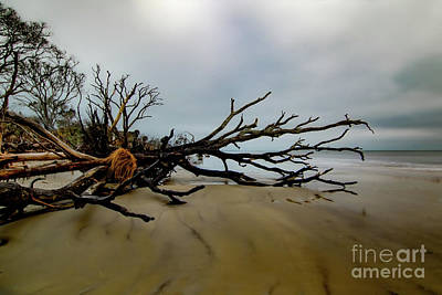 Achieving - Botany Bay Driftwood by Norma Brandsberg