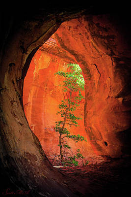 Landscapes Royalty-Free and Rights-Managed Images - Boynton Canyon 04-343 by Scott McAllister