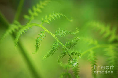 Royalty-Free and Rights-Managed Images - Bracken 2 by Veikko Suikkanen
