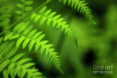 Royalty-Free and Rights-Managed Images - Bracken by Veikko Suikkanen