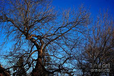 Frank J Casella Royalty-Free and Rights-Managed Images - Branch Formations Morning Blue Sky by Frank J Casella