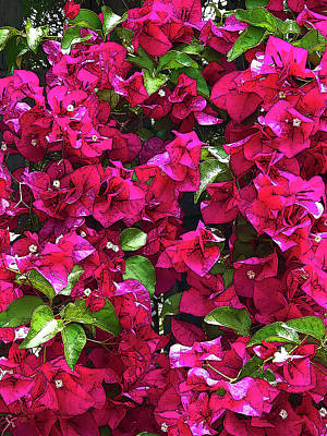 Mixed Media - Brian's Bougainvillea Bonanza by Robert J Sadler