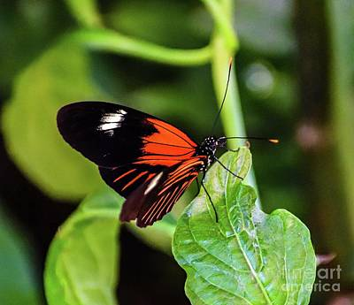 Abstract Airplane Art - Brilliant Colored Doris Longwing by Cindy Treger