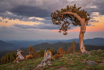 Royalty-Free and Rights-Managed Images - Bristlecone Sunset by Darren White