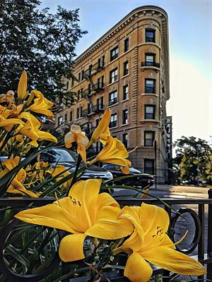 Photograph - Brooklyn Lilies by Cameron Dixon