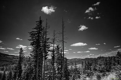 Namaste With Pixels Royalty Free Images - Brooklyn Logging road 03 Royalty-Free Image by Mike Penney