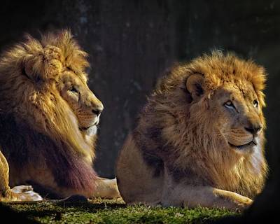 Animals Royalty-Free and Rights-Managed Images - Brothers by Matthew Adelman