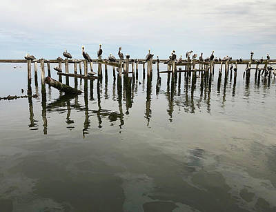 Lori A Cash Royalty-Free and Rights-Managed Images - Brown Pelicans Gathering on Pilings by Lori A Cash