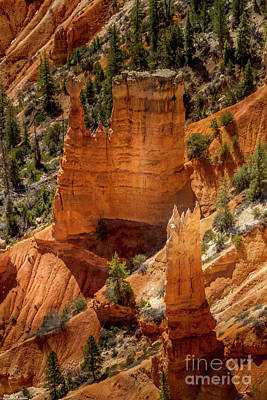 Personalized Name License Plates - Bryce Canyon 5 by Mitch Shindelbower