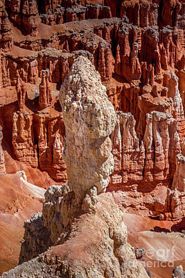 Personalized Name License Plates - Bryce Canyon Hoodoo by Mitch Shindelbower