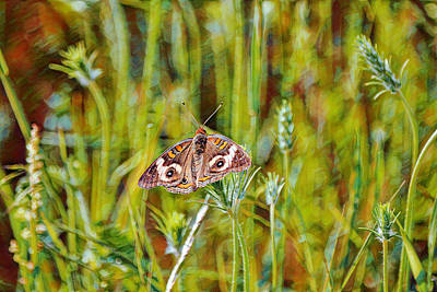 Animals Digital Art - Buckeye Butterfly on Wild Grass Impressionism by Gaby Ethington