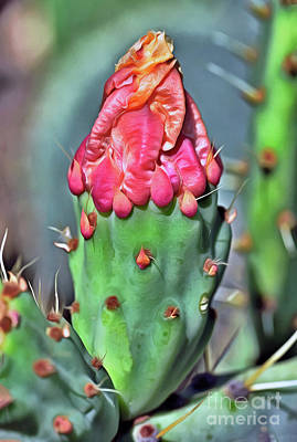 Abstract Male Faces - Bud of a cactus flower by George Atsametakis