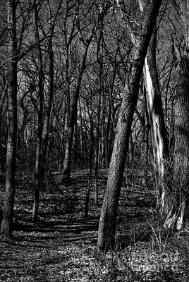 Frank J Casella Royalty-Free and Rights-Managed Images - Budding Trees in the Woods - Black and White by Frank J Casella