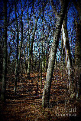 Frank J Casella Royalty-Free and Rights-Managed Images - Budding Trees in the Woods - Bright by Frank J Casella