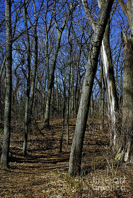 Frank J Casella Royalty-Free and Rights-Managed Images - Budding Trees in the Woods - Natural Colors by Frank J Casella