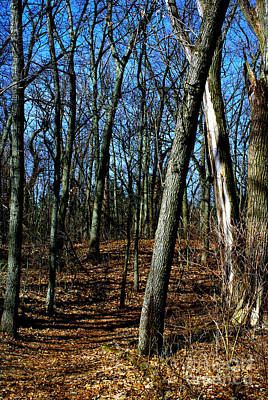 Frank J Casella Royalty-Free and Rights-Managed Images - Budding Trees in the Woods - Vibrant Colors by Frank J Casella