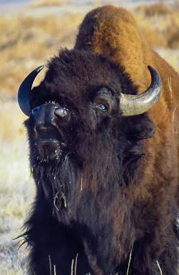 Staff Picks Cortney Herron - Buffalo Wild by Chad Vidas