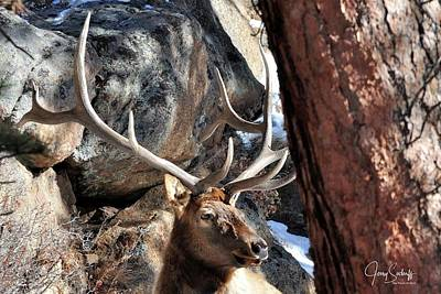 Jerry Sodorff Royalty-Free and Rights-Managed Images - Bull Elk Antlers DS by Jerry Sodorff