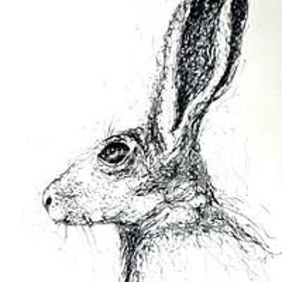 Comedian Drawings - Bunny Study by Tamyra Crossley