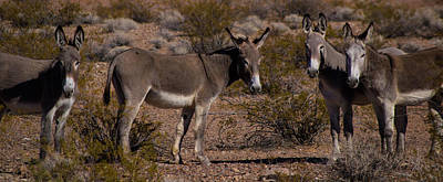 Mistletoe - Burro Family by James Dudrow
