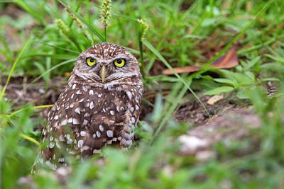 Namaste With Pixels Royalty Free Images - Burrowing Owl Royalty-Free Image by Amy Jackson