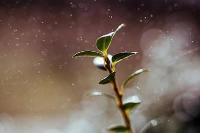 Photograph - Bush Rain by Jessica Nelson