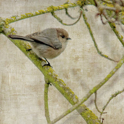 The Rolling Stones Royalty Free Images - Bushtit in Tree Royalty-Free Image by Rebecca Cozart