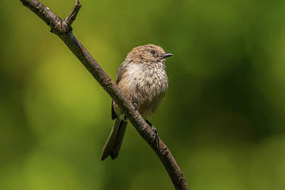 Chemical Glassware - Bushtit with Green Background by Marv Vandehey