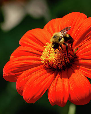 Kitchen Mark Rogan Rights Managed Images - Busy As A Bee Royalty-Free Image by Robert Ratcliffe