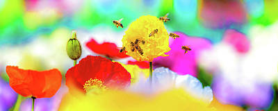 Royalty-Free and Rights-Managed Images - Busy Bees by Az Jackson