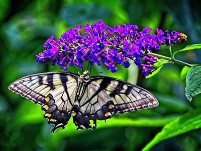 Photograph - Butterfly Bush Attraction by Allen Nice-Webb