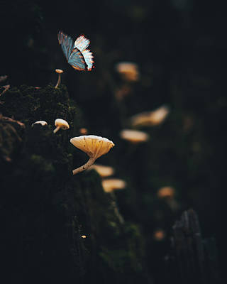 Photograph - Butterfly in the forest  by Lance Reis