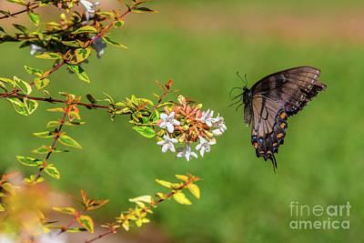 Animal Portraits - Butterfly landing by Rick Mann