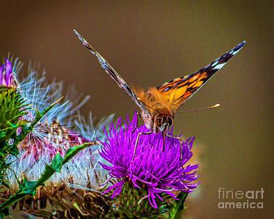 Keith Richards - Butterfly of Spring by Nick Zelinsky