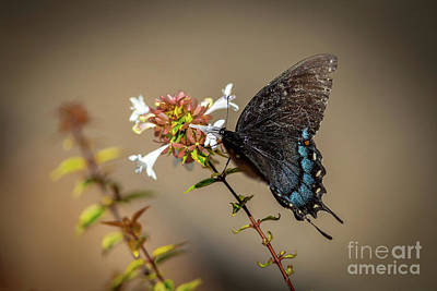 Animal Portraits - Butterfly on flowers by Rick Mann