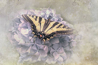 Queen Rights Managed Images - Butterfly on Lavender Hydrangea Flower Royalty-Free Image by Jennie Marie Schell