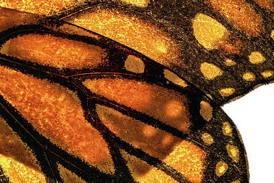 Photograph - Butterfly Wings by Christopher Johnson