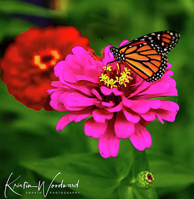 Animals Royalty-Free and Rights-Managed Images - Butterfly wonderland by Kristin Woodward