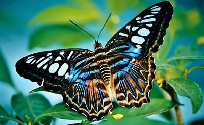 Travel - Butterflycalia Catus 2 No.1. L B by Gert J Rheeders