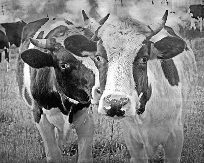 Winter Animals - BW Cows by Marty Koch