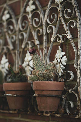 Photograph - Cacti World by Bets Wilson