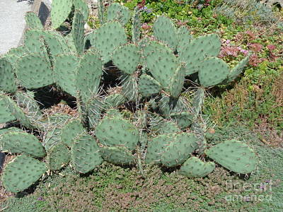 Sean Rights Managed Images - Cactus 1002 Royalty-Free Image by Select Photos