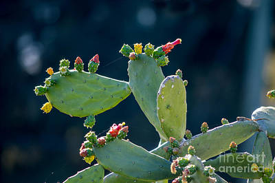 World War 2 Action Photography - Cactus Flower Buds by Marie Dudek Brown