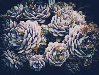 Surrealism Royalty-Free and Rights-Managed Images - Cactus Plant Nature Flora Green Prickly Spur - Surreal Art by Ahmet Asar by Celestial Images
