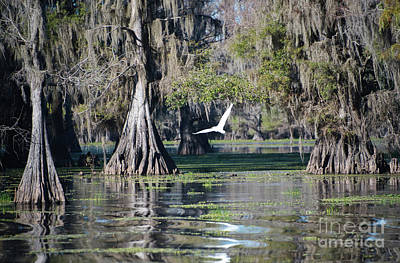 Clouds - Caddo Lake by Andrea Anderegg