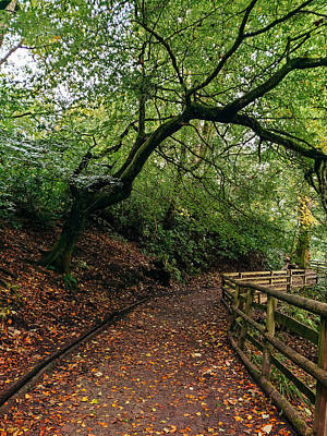 David Gallie Royalty-Free and Rights-Managed Images - Calderglen Autumn 2021 - 01 by David Gallie