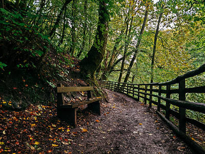 David Gallie Royalty-Free and Rights-Managed Images - Calderglen Autumn 2021 - 03 by David Gallie
