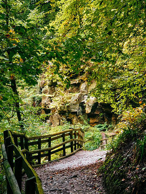 David Gallie Royalty-Free and Rights-Managed Images - Calderglen Autumn 2021 - 04 by David Gallie